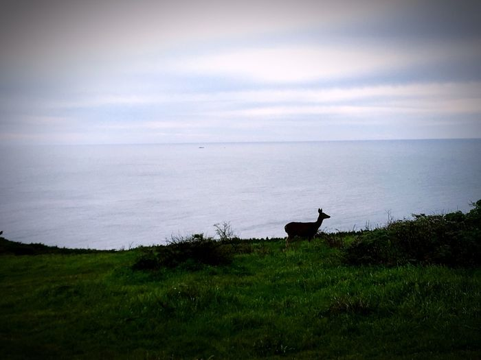 Ocean Wildlife Animal Themes Nature Sea Grass Beauty In Nature Animals In The Wild Sky Horizon Over Water Animal Wildlife Outdoors Mammal Deer You Had Me At Nature