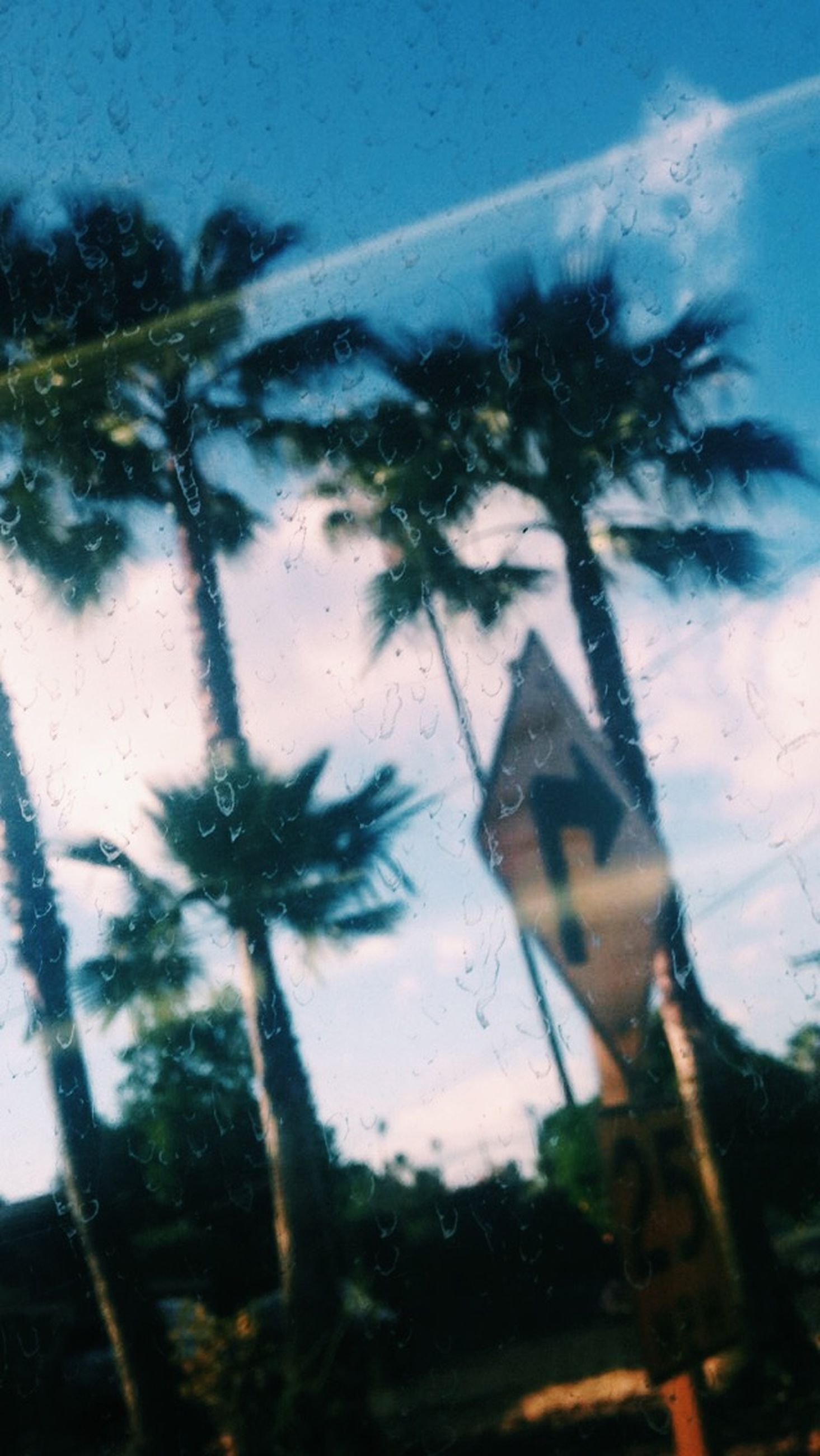 tree, sky, silhouette, window, glass - material, low angle view, palm tree, transparent, transportation, day, rain, dusk, wet, street, car, land vehicle, growth, outdoors, nature, built structure