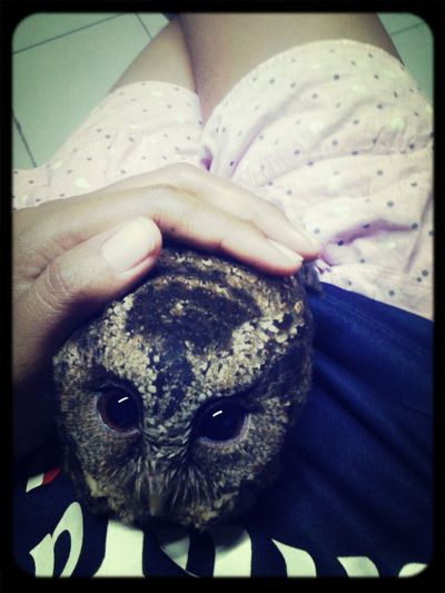 Bowl ♥ Love Owl Animal :))))