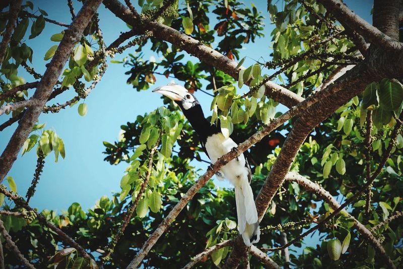 Parrot Nature Wildlife Malaysia
