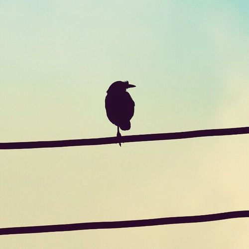 The beauty of silence. Birds Nature Photography Naturelovers Birds Of EyeEm  Beauty In Solitude Solitudeisbliss Standing Solo Contemplating Life Series Bird Photography