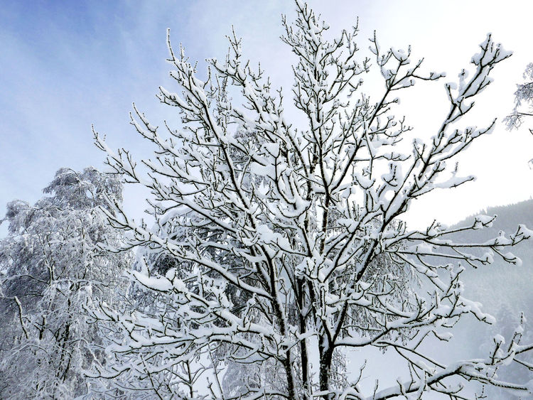 Frozen Frozen Branches. Winter Branch Cold Temperature Snow Tranquility White