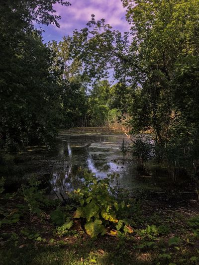 Lake Erie Metro Park Plant Tree Water Nature Growth No People Outdoors Day Reflection Lake Beauty In Nature Tranquility Green Color Sky Cloud - Sky Sunlight Wet Scenics - Nature Grass