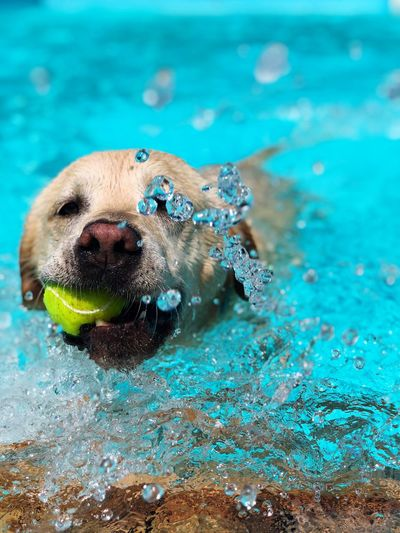 Dog playing with ball in swimming pool