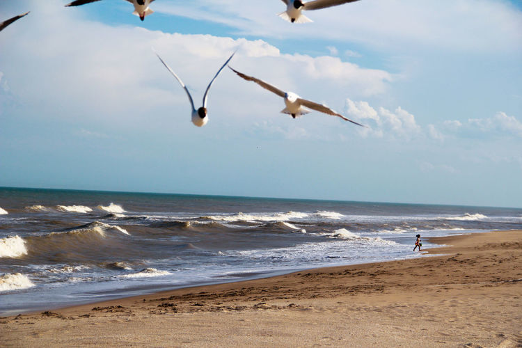 Close-up of seagulls on beach with girl walking in background against sky