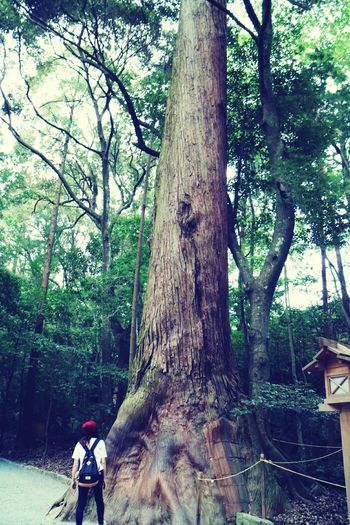 Japan Mie Grand Shrine Of Ise Naiku Holiday Worshipping Big Tree Nature Approach To Shrine