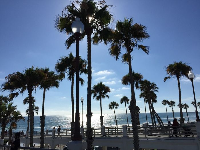 At Oceanside Pier California Oceanside, Ca Beach Beauty In Nature Blue Clear Sky Day Growth Horizon Over Water Nature No People Outdoors Palm Tree Scenics Sea Silhouette Sky Tall Tranquil Scene Tranquility Tree Tree Trunk Water