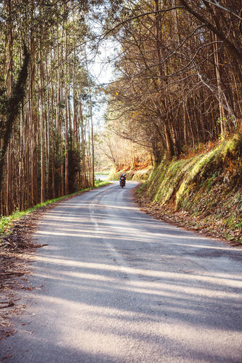 Forest road landscape in autumn with couple riding a motorbike in the background Autumn Couple Driver Green Motorcycle Motorcyclist Nature Road Tree Trip Adventure Background Bike Destination Direction Fall Fast Forest Motorbike Ride Season  Senior Steering Two People Vertical