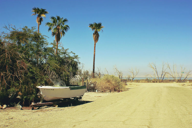 Desert Desolate Salton Sea Beauty In Nature Boat Clear Sky Day Nature No People Outdoors Palm Tree Palm Trees Sky Small Boat Sunlight Transportation Tree