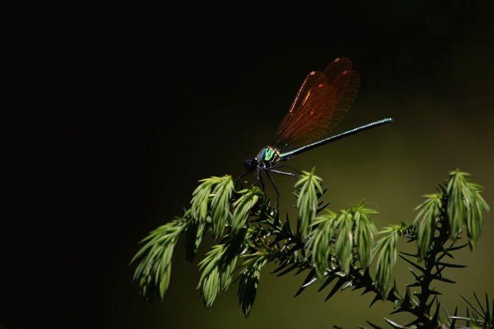 Macro Nature EyeEm Best Shots - Nature Light And Shadow EyeEm Nature Lover EyeEm Gallery