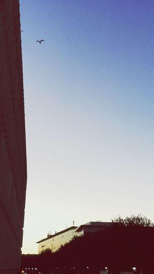 Early Birdorning] , The Early Bird , Sky , Building , bridge , Reflection