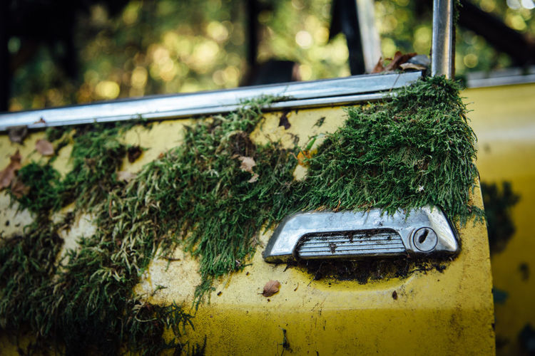 Mossy Pollution Old Retro Styled Vintage Vintage Car Handle Doorknob Day Moss No People Close-up Plant Green Color Motor Vehicle Nature Outdoors Car Focus On Foreground Land Vehicle Selective Focus Damaged Abandoned Metal Tree Mode Of Transportation Growth Rusty