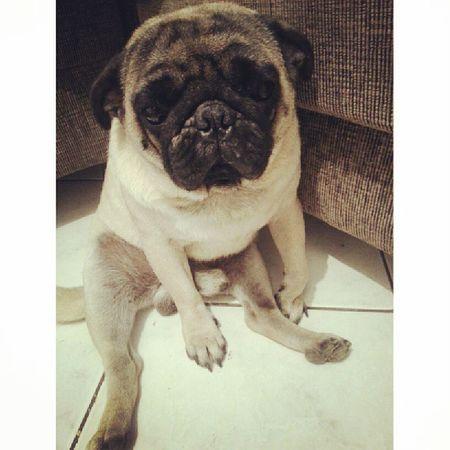 Ele fica sentado bonitinho no canto dele, pfvr educado dms Owwwwnt ♥ Pugs Ilovepugs