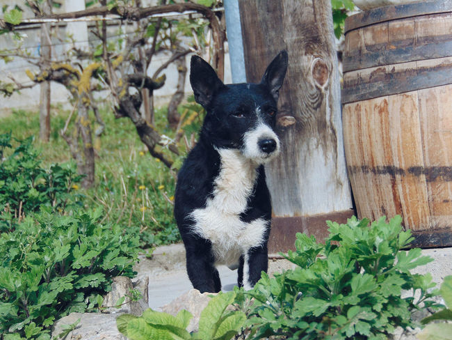 One Animal Dog Pets Animal Themes Domestic Animals Serbianature Black Color Kragujevac Jagodina Day Serbia Srbija Nature Srbijainstagram Srbijauslikama Serbian Photos Serban Photos Doglover Dog Life Dog Photography Dogsofinstagram