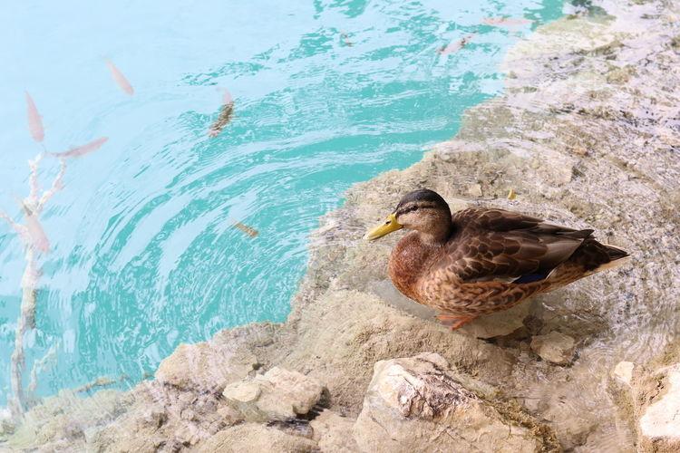 Bird perching on shore