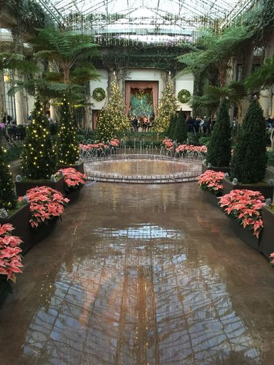 LongwoodGardens Flowers Water Reflection Flower Nature Growth Beauty In Nature Tree Plant No People Day Architecture Outdoors
