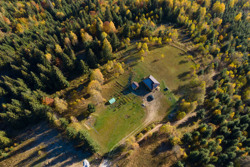 Aerial view of house amidst trees