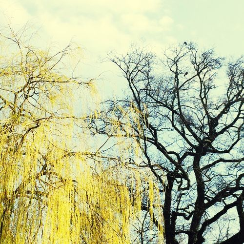L'obscurantisme de l'hiver contre l'incandescence du printemps.
