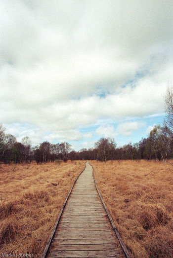 Am ewigen Meer Beauty In Nature Cloud - Sky Day Field Landscape Nature No People Outdoors Scenics Sky The Way Forward Tranquility Tree