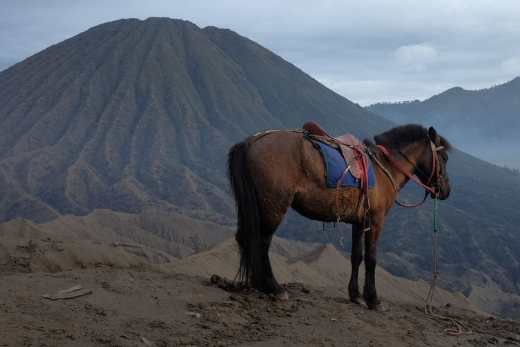 View of a horse on mount bromo