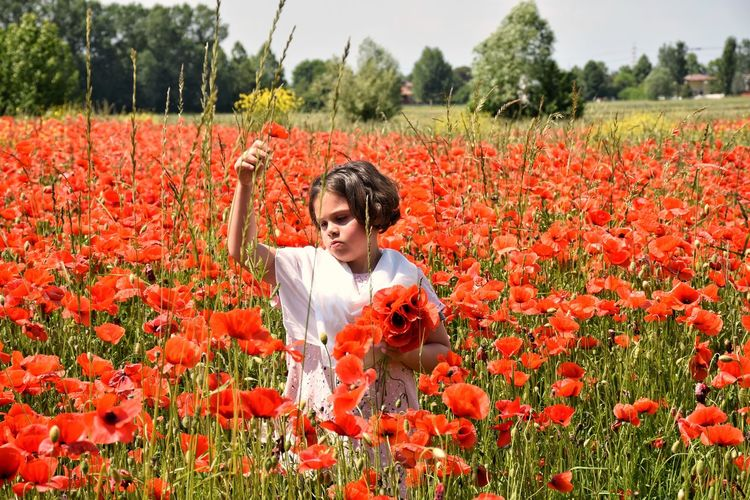 Girl Picking Red Poppy Flowers In Field