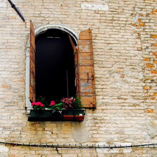 Lookinside Lookingup Window Shutters Shutter Old Buildings Old Worn Old Brick Building Brick Wall Windows Pot Plant Façade Building Italy Architecture Showcase: February Venezia Venice Plants Background Venice, Italy Old Building  Backgrounds Fine Art Photography