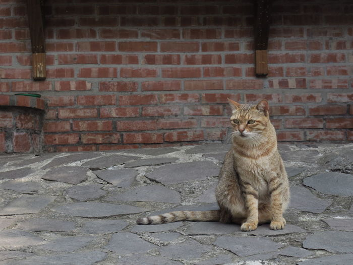 Animal Animal Themes Architecture Brick Brick Wall Built Structure Cat Domestic Domestic Animals Domestic Cat Feline Mammal No People One Animal Pets Relaxation Sitting Tabby Vertebrate Wall Wall - Building Feature Whisker