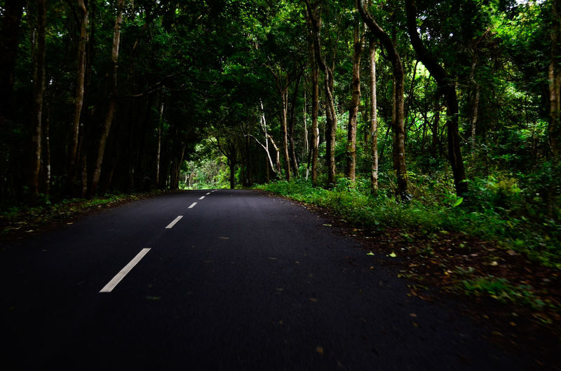 Beauty In Nature Day Forest Green Color Horizontal Nature No People Outdoors Road The Way Forward Transportation Tree
