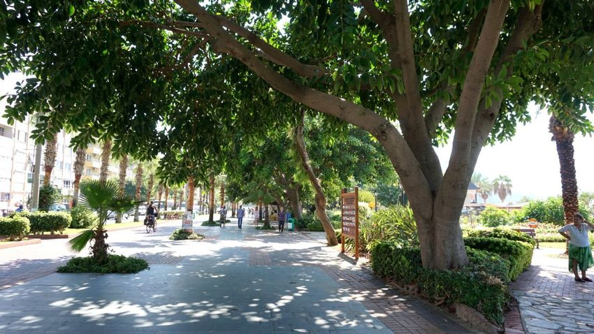 Alanya. Turkey. Alanya Trees Tree Water Sky Botanical Garden Growing Garden Path Empty Road Growth Tree Trunk