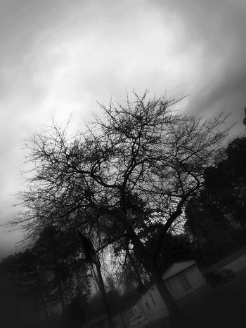 Blackandwhite Blackandwhite Photography monochrome photography Monochrome Greyscale Tree Cloud - Sky Low Angle View Sky No People Outdoors Day Silhouette Nature