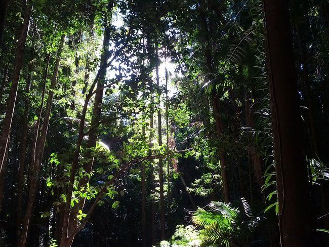 The Purist (no Edit, No Filter)Eyemnaturelover Rainforest at Fraser Island