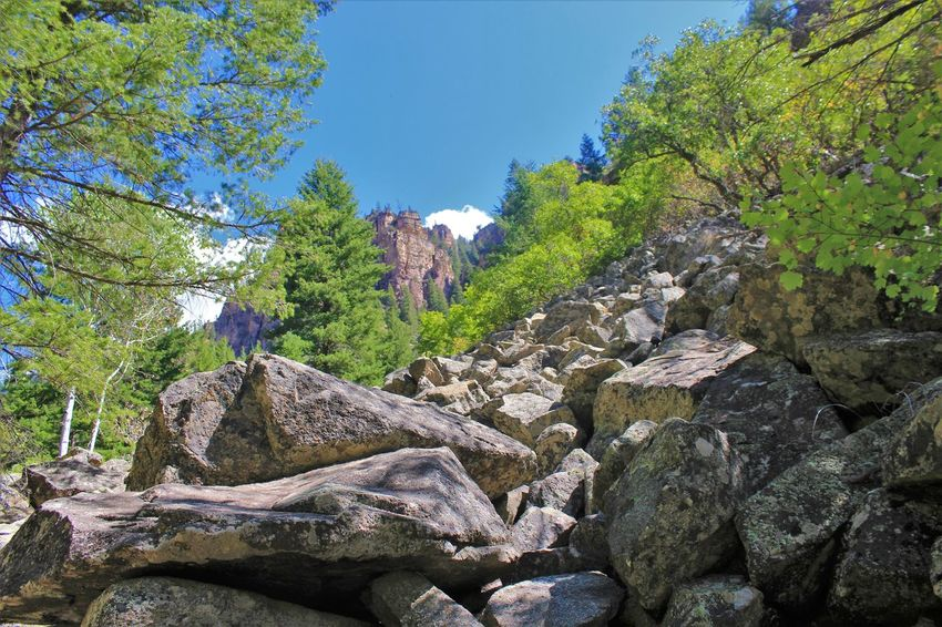 Tree Plant Rock Solid Rock - Object Nature Sky Beauty In Nature Land Tranquility Forest Day Growth Scenics - Nature Tranquil Scene Non-urban Scene No People Mountain Landscape Outdoors