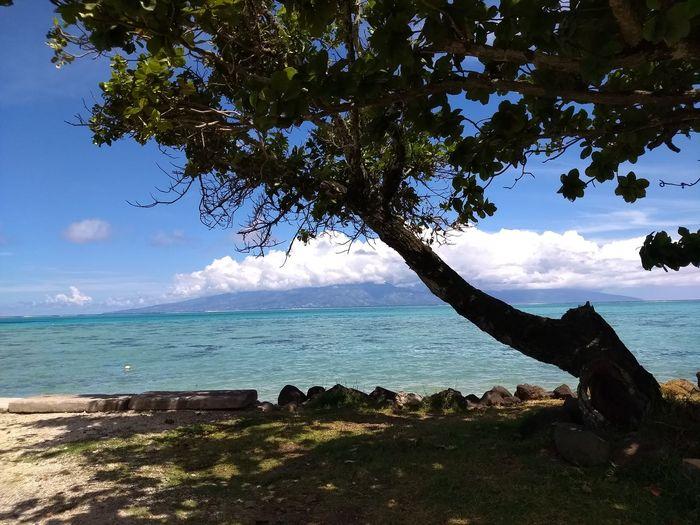 Tahiti Tahiti ❤