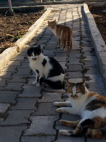 Domestic Cat Domestic Animals Animal Themes Feline Pets Mammal High Angle View Cat Tortoiseshell Cat Outdoors No People Day