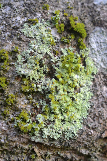Nature Growth Close-up Outdoors Moss Lichen Green Color Beauty In Nature Tree Trunk Fungus Tree Fragility Tranquility Parasit