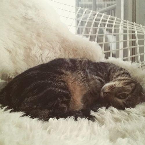 Samedi matin grass' mat... Gabin Cat Instacat Dailycat love