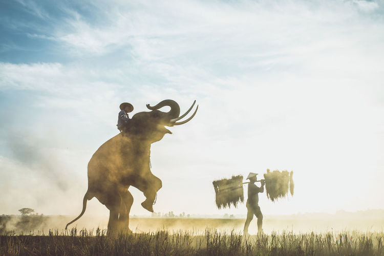 Elephant rearing up while farmer working in farm at sunset