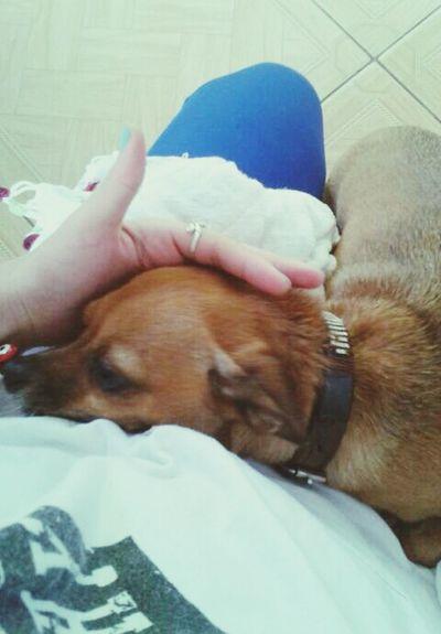 ? Dog Love