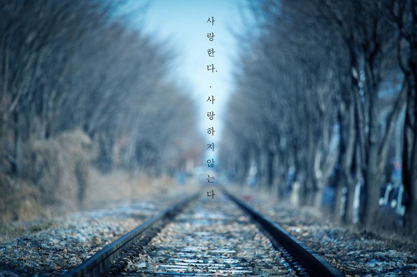 기찻길 Korea Tree Landscape Wind EyeEm Best Shots EyeEm Selects Snow Exa Trainrail Winter The Way Forward No People Road Outdoors Cyberspace Day Technology