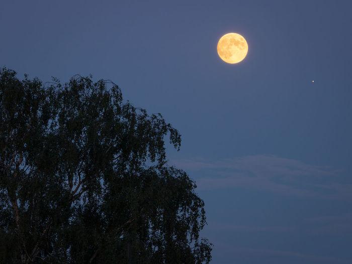 Sky Moon Tree