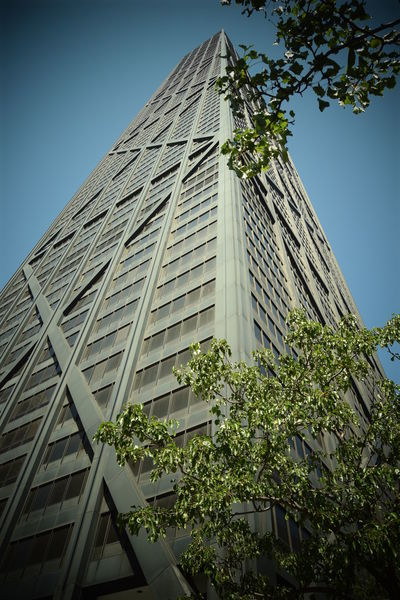 """Sometimes they say """"sky is the limit"""", but........... is it?? Leaves Branches Low Angle View Low Angle Shot Chicago Chicago Downtown 360 Chicago City Modern Skyscraper Tree Greenhouse Sky Architecture Building Exterior Built Structure Office Building High Rise Infrastructure Tall Cityscape Urban Scene Office Block Downtown Skyline Tall - High Tower"""