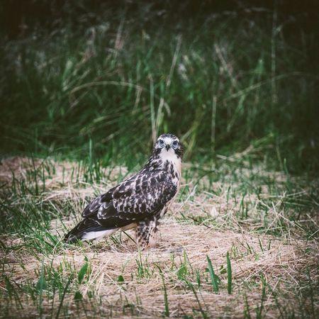 Decksteinerweiher Birds Wildlife EyeEm Nature Lover