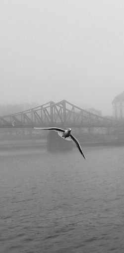Bridge - Man Made Structure Nature Fog Water Scenics No People Outdoors Day Animals In The Wild City Sky Animal Wildlife Beauty In Nature Animal Themes Bird Urban Skyline Perching No People, Indoors Adapted To The City
