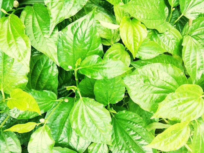 let's go green 1Green Leaf Nature