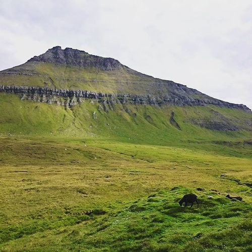 Highest Mountain Faroe Faroeislands Hiking Placestovisit Placestogo Bestisland Paradise Dreamplace Green Sky Skyporn Grandiose Mik Lovethisplace