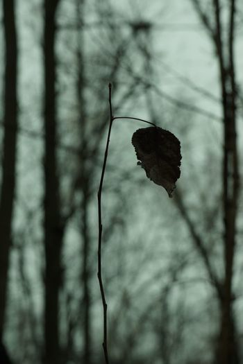 Rainy Late Autumn Day Autumn Plant Tree Focus On Foreground Nature No People Beauty In Nature Leaf Plant Stem Branch