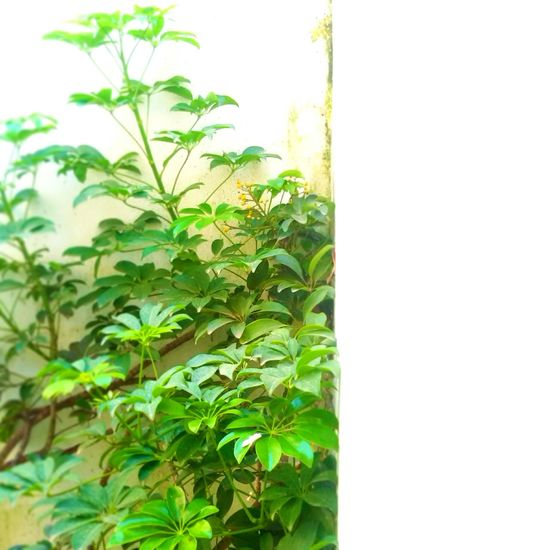 Beauty In Nature Day Plant Life Freshness Green Green Color Leaf Plant Nature Growth Plant Leaf Wall - Building Feature Close-up Green Color Stem Green Freshness Nature Growing Day Beauty In Nature Fragility Botany No People