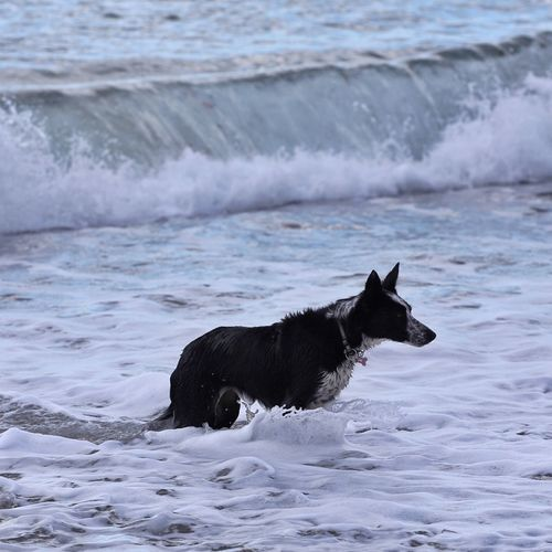 High angle view of dog in sea