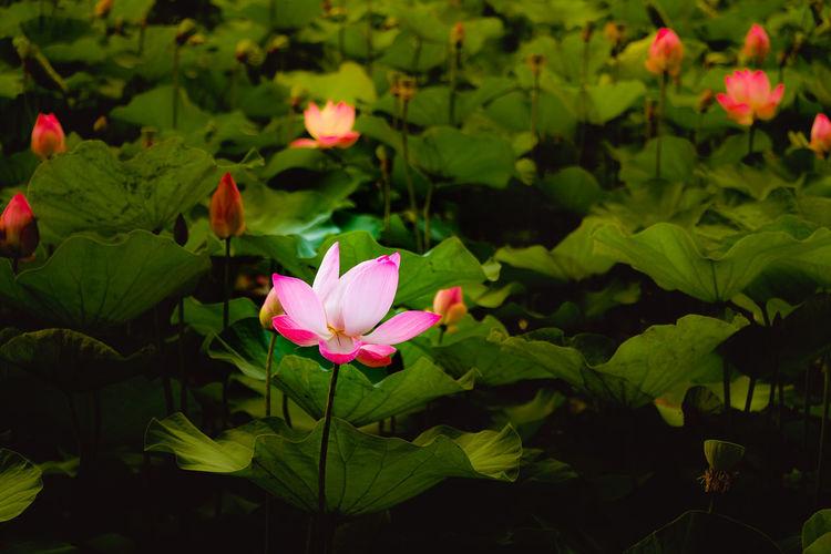 Beautiful pink