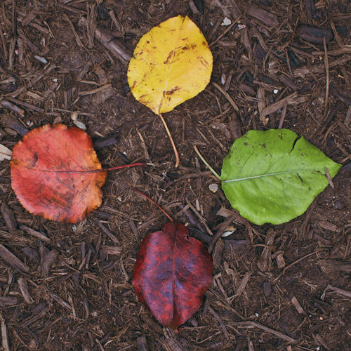Leaves Leaf Plant Part Autumn Nature Plant No People Change Dry Close-up Falling Day Land Outdoors Beauty In Nature Vulnerability  Fragility Dirt Color Colorful Arrangement Four Alike Stages Levels